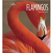 Flamingos by Gish, Melissa, 9781628320022