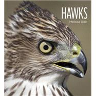 Hawks by Gish, Melissa, 9781628320046