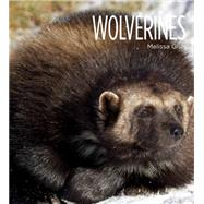 Wolverines by Gish, Melissa, 9781628320077