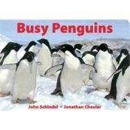 Busy Penguins by Schindel, John, 9781582460161