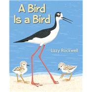 A Bird Is a Bird by Rockwell, Lizzy, 9780823430420