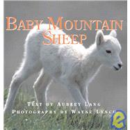 Baby Mountain Sheep by Lang, Aubrey, 9781554550432