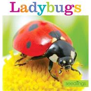 Ladybugs by Frisch, Aaron, 9781628320459