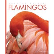 Flamingos by Riggs, Kate, 9781628320886