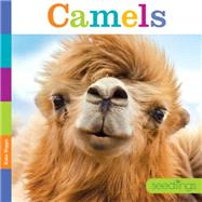 Camels by Riggs, Kate, 9781628321135