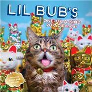 Lil Bub 2017 Wall Calendar by Lil Bub, 9781419721656