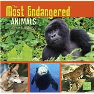 The Most Endangered Animals in the World by Gagne, Tammy, 9781491422373