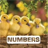 Numbers by Nouvion, Judith; Tamm, Vali, 9780544512658