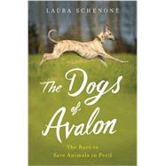 The Dogs of Avalon by Schenone, Laura, 9780393073584