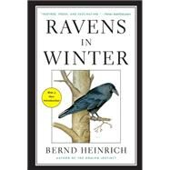 Ravens in Winter by Heinrich, Bernd, 9781476794563