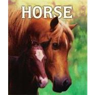 Horse by Doyle, Malachy; Rinaldi, Angelo, 9781416924678