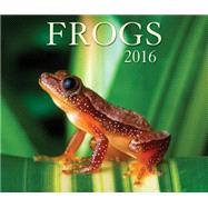 Frogs 2016 Calendar by Firefly Books, 9781770855342