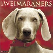 Just Weimaraners 2018 Calendar by Willow Creek Press, 9781682346372