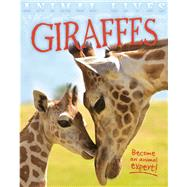 Giraffes by Morgan, Sally, 9781609926922