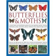 The Illustrated World Encyclopedia of Butterflies & Moths by Morgan, Sally, 9780754818847